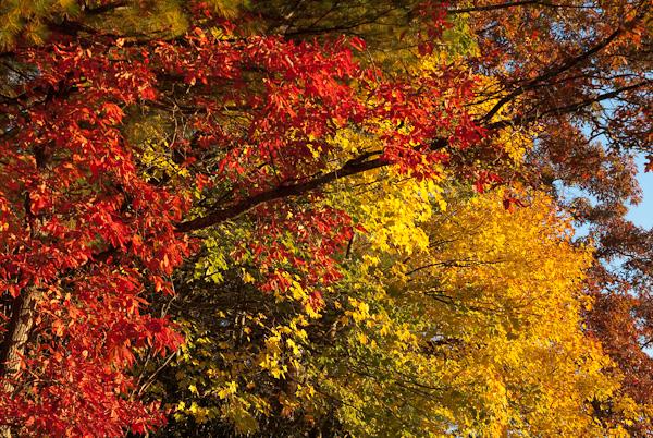 Fall colors at Penland