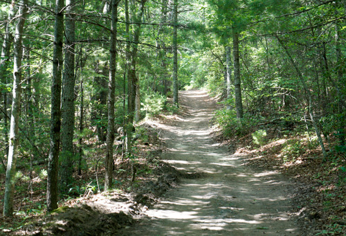 The woods at Penland