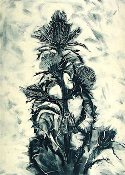 "Phil Garrett, Thistle II Hunting Island2003, Monotype, Chine Colle,  30 x 22"" on paper"